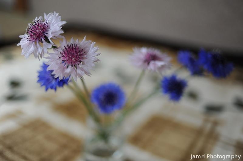3D Flowers.<br /> Loving the 3D effect from the full frame sensor.