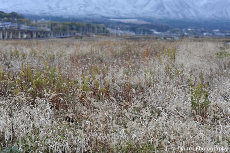 Winter Field.
