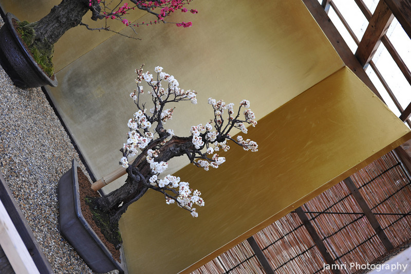 A Bonsai Display.<br /> Showing white and pink Ume (Plums).
