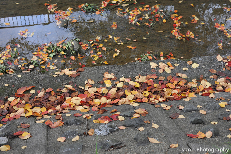 Leaves along the water's edge.