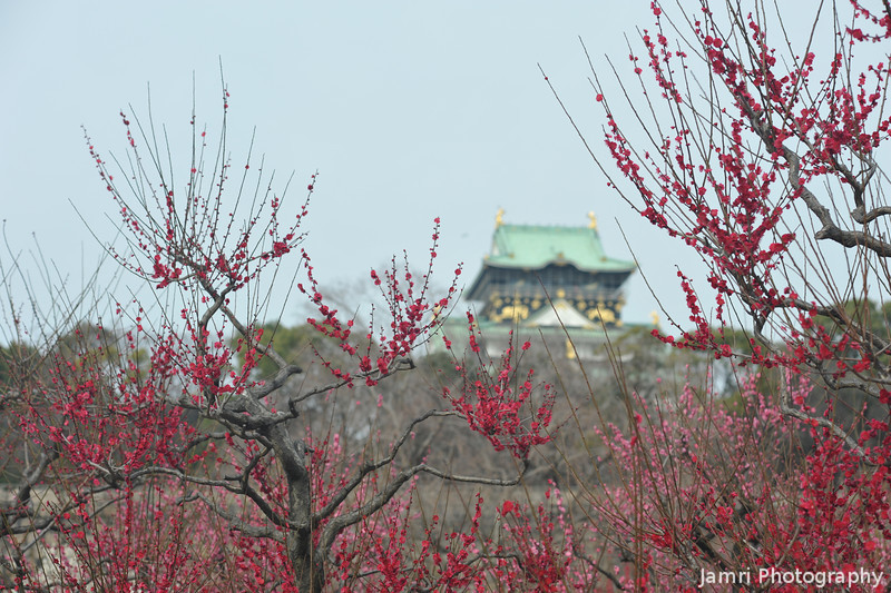 Through the Red Ume.