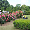 In the Rose Garden.<br /> At the Kyoto Botanical Gardens.