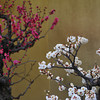 White and Pink Bonsai Ume (Plum).