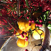 Fruit and Chillies Arrangement.<br /> One of the Ikebana creations on display at the Arashiyama Hanatouro.