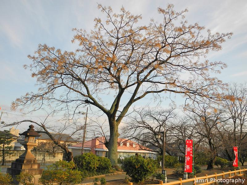 The Big Berry Tree.