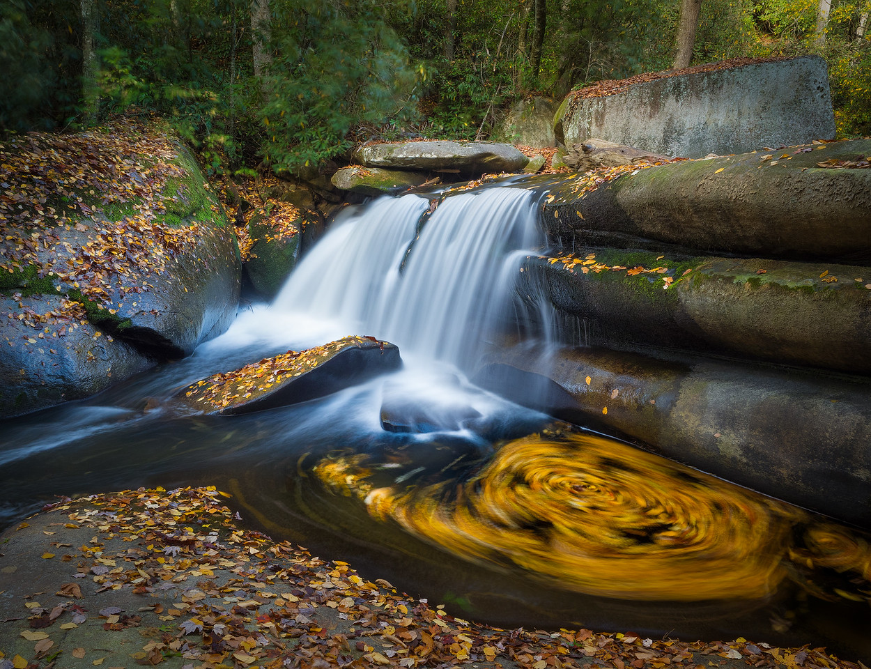 Autumn Swirl..