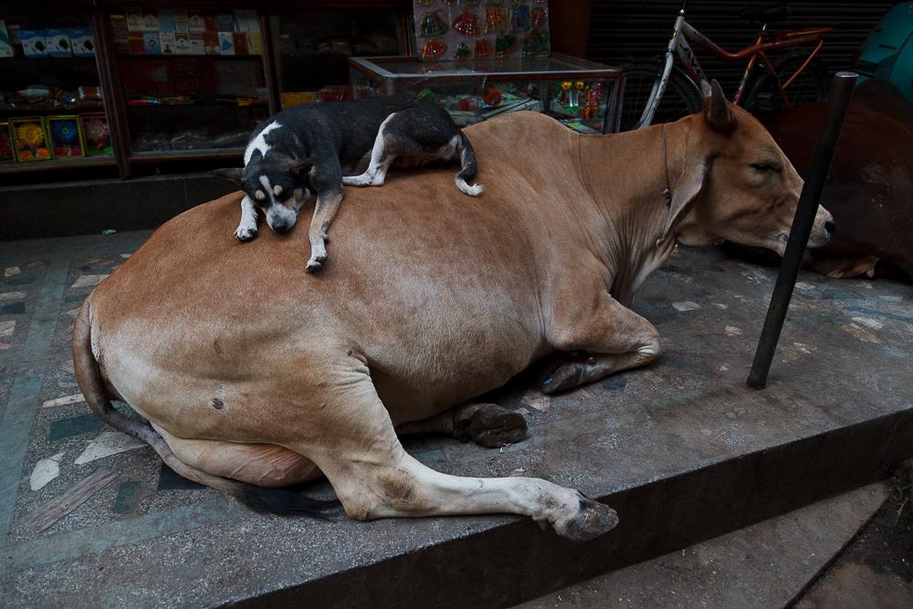 Varanasi, India 2015