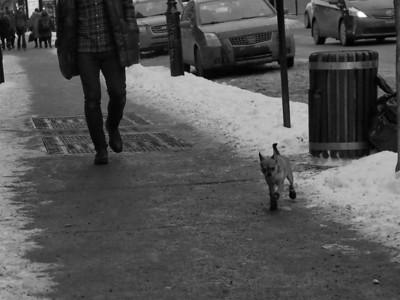Chilly Dog !