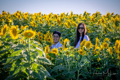 Sunflowers-24