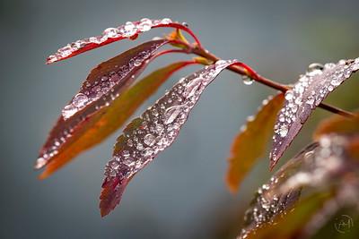 Autumn-21
