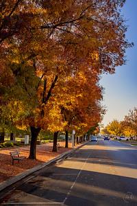 Autumn-6