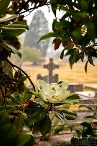 Cemetery-106
