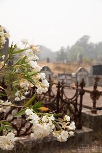 Cemetery-120