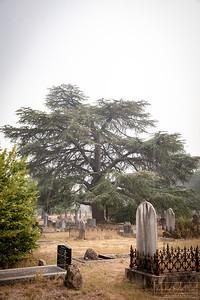 Cemetery-114