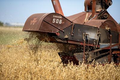 Harvest-23