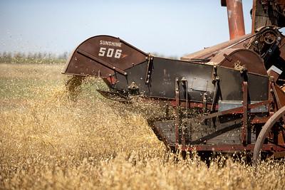 Harvest-21