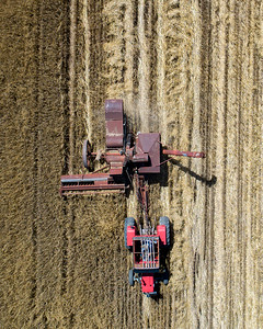 Harvest-17