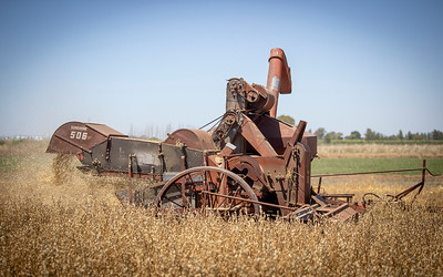Harvest-20