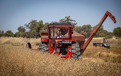 Harvest-5