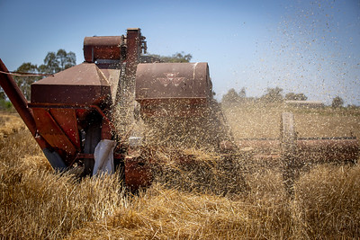 Harvest-9