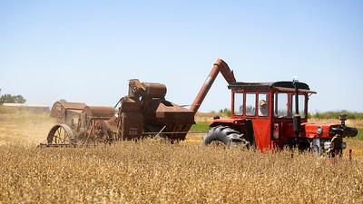 Harvest-19