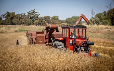 Harvest-6