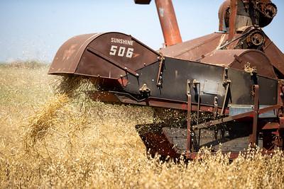 Harvest-22
