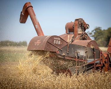 Harvest-24