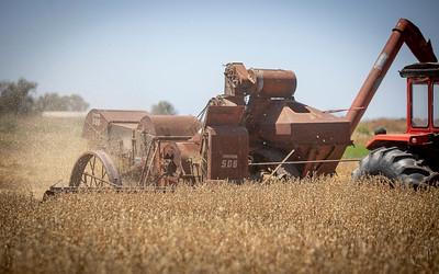 Harvest-18