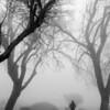 Foggy Morning Run - 1