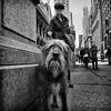 Neville -New York