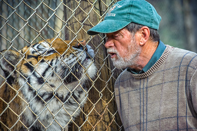 A Siberian Tiger with handler at the Exotic Feline Rescue Center in Indiana.