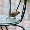 """Reminds me of a Jimmy Cliff song, """"Keep your eye on the sparrow"""""""