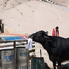 A cow eats trash and a man pees in public at the ghats in Varanasi, India. February 15, 2018. Photo by Lorelei Trammell