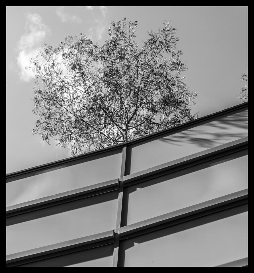 The Makeshift Tree