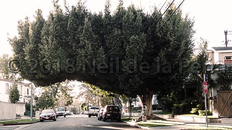Trump Tree