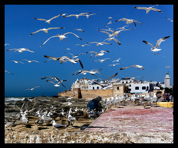 Birdman of Essaouira