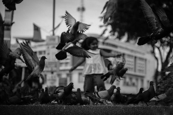 Pigeons' Walk