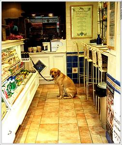 chien attendant-04 1
