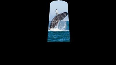 02 whale breaching
