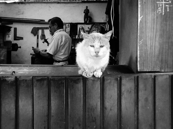 The Shoemaker's Cat