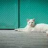 The Royal Kitty