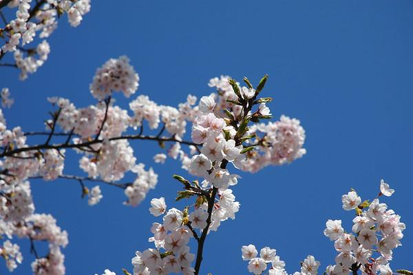 2006-04-17 natuur in de straat en tuin