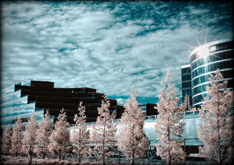Waterfront, Myrtle Edwards Park, Seattle, WA<br /> Infrared converted D200 enhanced color