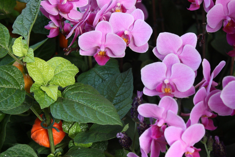 Some flowers at Borough market -- I love the colours in this one.