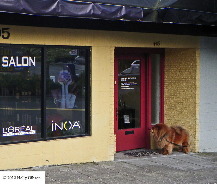 In need of a haircut - Chow in front of hair salon