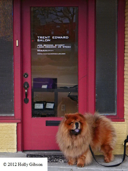 Next in line - Chow waiting at Salon
