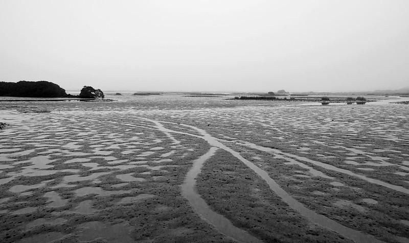 Low tide on Cedar Key in a foggy morning, December 2, 2013