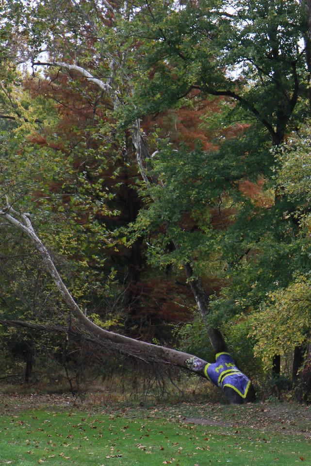 Bikini Tree 10-23-2010
