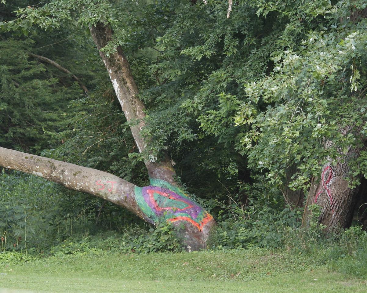 Bikini Tree 7-14-2011